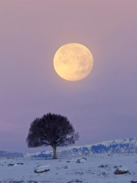 A Full Moon Rising over a Single Tree on a Snowy Hill by Robbie George