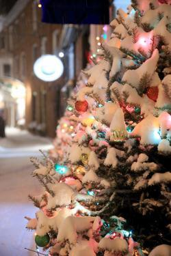 A Snow Covered Tree in Portsmouth, New Hampshire Lights Up a Winter Night by Robbie George