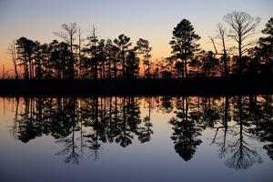 Silhouetted Trees and their Reflections in Water at Sunrise by Robbie George