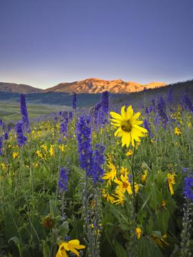 Wildflowers in the Rocky Mountains at Sunrise by Robbie George