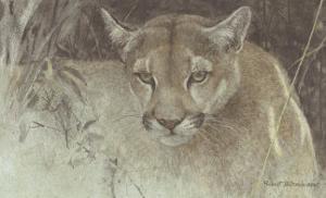 Tropical Cougar by Robert Bateman