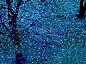Autumn Tree in Blue, Green, and Purple by Robert Cattan