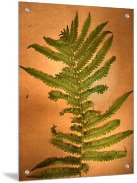 Fern Leaves by Robert Cattan