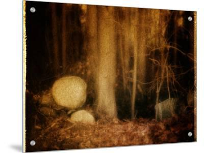 Ghostly Forest Landscape by Robert Cattan