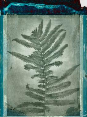 Negative Fern Leaves by Robert Cattan