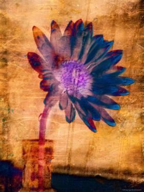 Purple Daisy by Robert Cattan