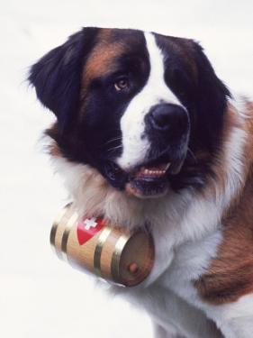 St. Bernard with Rescue Barrel by Robert Cattan