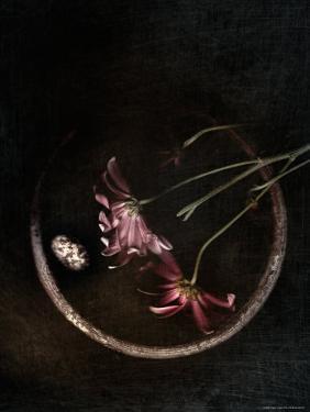 Wilted Purple Flowers in Pot by Robert Cattan