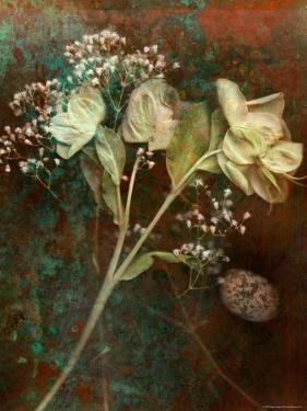 Wilted White Rose and Baby's Breath by Robert Cattan