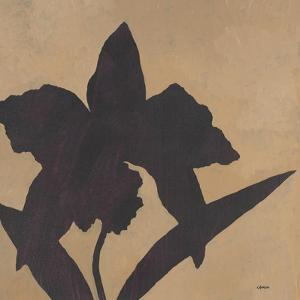 Orchid I by Robert Charon