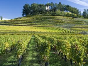 Vineyards, St. Emilion, Gironde, France, Europe by Robert Cundy