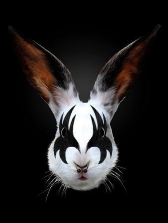 Rabbit Rocks by Robert Farkas