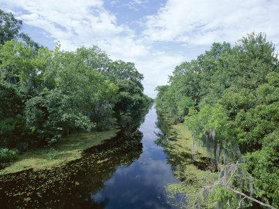 Bayou in Swampland at Jean Lafitte National Historic Park and Preserve, Louisiana, USA