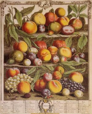 Fruits of the Season, Autumn by Robert Furber