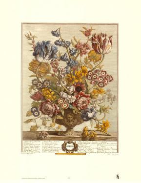 Twelve Months of Flowers, 1730, April by Robert Furber