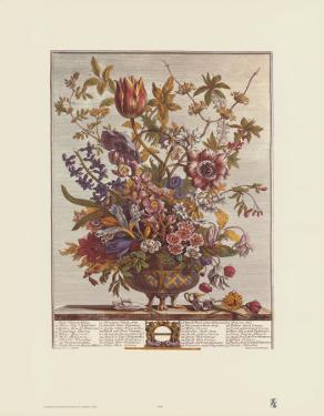 Twelve Months of Flowers, 1730, February by Robert Furber