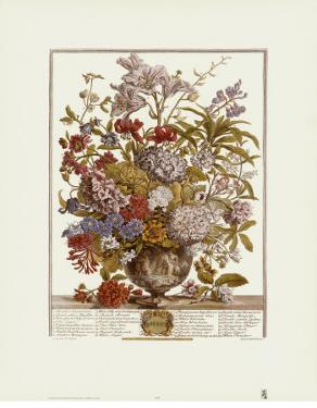 Twelve Months of Flowers, 1730, July by Robert Furber