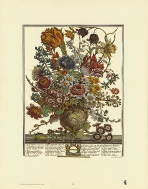 Twelve Months of Flowers, 1730, March by Robert Furber