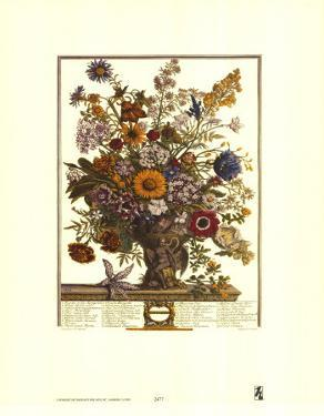 Twelve Months of Flowers, 1730, November by Robert Furber