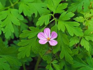 Pink Flower Blooming by Robert Glusic