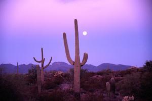 Saguaro Sunset by Robert Glusic