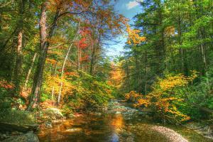 Autumn Brook by Robert Goldwitz