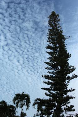 Cedar Palm Sky Vertical by Robert Goldwitz