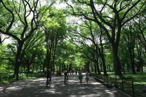 Central Park Mall Summer by Robert Goldwitz