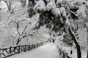 Central Park Path Deep Snow by Robert Goldwitz