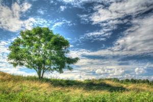 Cornwall Tree by Robert Goldwitz