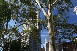 Flatiron Building with Trees by Robert Goldwitz