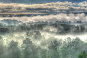 Gray Mist by Robert Goldwitz