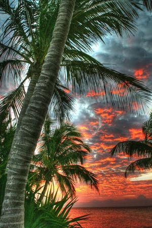Key West Palm Sunrise Vertical