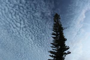 Lone Cedar Sky by Robert Goldwitz