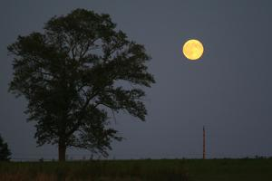 Moonrise Lone Tree by Robert Goldwitz