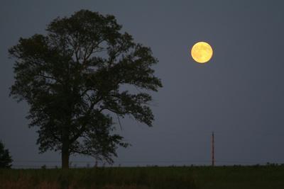 Moonrise Lone Tree