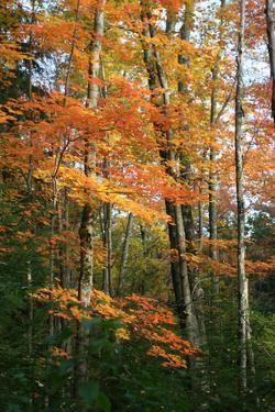 Orange Yellow Fall Vertical 9840 by Robert Goldwitz