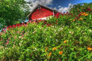 Red Barn and Flowers by Robert Goldwitz
