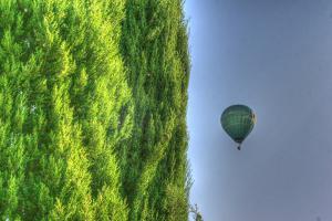 Tuscan Cedar and Balloon by Robert Goldwitz