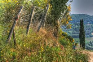 Tuscan Cedar and Fence by Robert Goldwitz