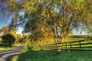 Willow Road by Robert Goldwitz