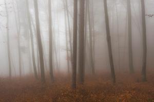 Autumn Forest in Mist by Robert Haasmann