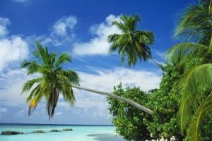 Beach and Palm Trees by the Indian Ocean at Nakatchafushi, North Male Atoll, Maldives by Robert Harding