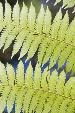 Ferns by Robert Harding