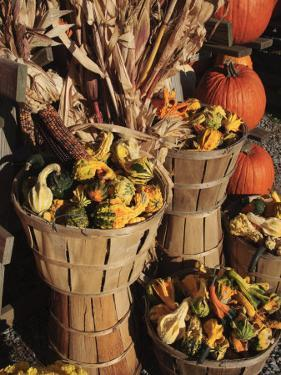 Indian Ornamental Corn and Gourds,The Hamptons, Long Island, New York State, USA by Robert Harding