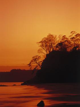 Pacific Coast Rain Forest at Dusk, Costa Rica by Robert Houser