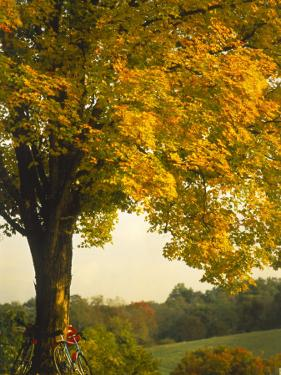 Road Bikes Leaning Against Maple Tree by Robert Houser