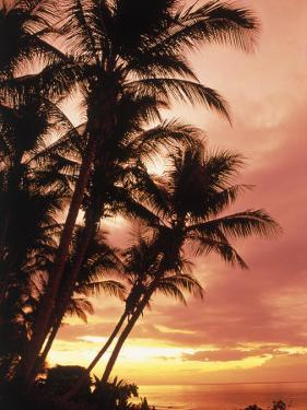 Silhouetted Palm Trees, Costa Rica by Robert Houser