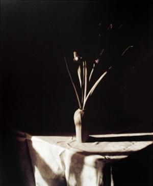 Two Iris, Cambridge by Robert J. Steinberg