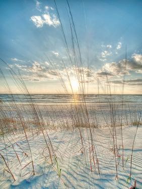 Among the Grass by Robert Jones
